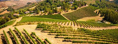 produzione-vini